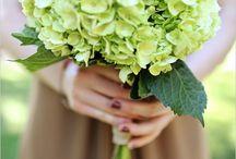 Green hydrangea weddings