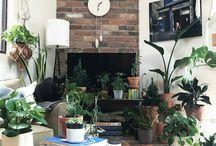 растения в сиудию
