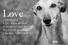 Love is..... Greyhounds