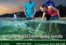 Tangalooma Wild #Dolphin Feeding – #Australia