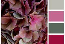 Color / Color combinations / by Fran Noerr