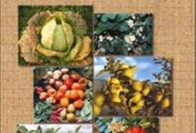 Alertas Bibliográficas de Ingeniería Agroforestal / Facultad de Ciencias Ambientales