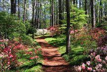 Garden / by Nicole Klimper