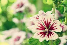 Zahradničení, které miluju