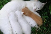 LOVING MOTHER CAT FEEDING HER BABIES & A STRAY