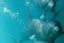 Del mar de los delfines