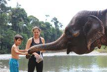 Bukit Lawang - Sumatra - Indonesia / www.junglesumatra.com whatsapp +6281364108007