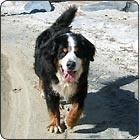 Tahoe Vacation Rentals - Dog Friendly / North Tahoe Vacation Rentals that are Dog Friendly