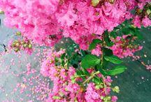 fleurs pour toujours