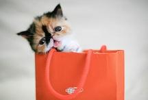 Cute Pets / by ☯ ☮☪