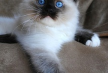 kedi minişşlerr
