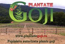 Plantatie Goji / Plantatie Goji certificata BIO