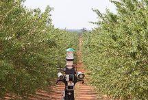 uav agriculture