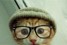 Soft Kitty, Warm Kitty... Little Ball of Fur / by Rachael Larsen