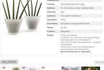 Hobby - Planterne / Pasning