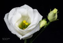 Flowerku