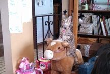 Cats on cats on cats / by Malala Martinez