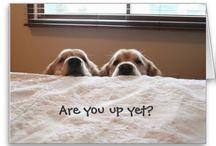 wake up, it's morning !!!