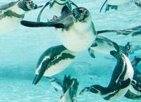 LB penguin party