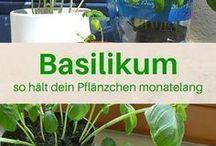 Garten, Pflanzen, Urban Gardening