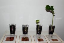 Ecole plantations