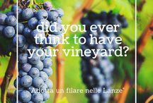 """Adotta un filare nelle Lanze/Adopt your vineyard! / Il progetto """"Adotta un filare"""", promosso dal Comune di Castagnole delle Lanze, e iosono wine bar, insieme per un evento unico"""