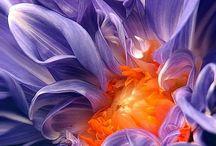 Color: Purple & Orange
