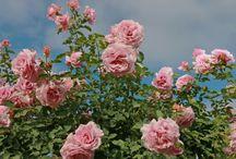 sky&flower