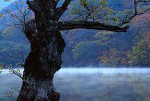 청송주산지의 가을 / 2015.11.01 가을의 주산지