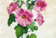 różowa inspiracja