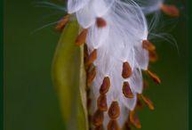 Nature / #Nature #UniquePlants