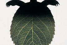 Green and ecologist graphics / by Alessandro Bonaccorsi
