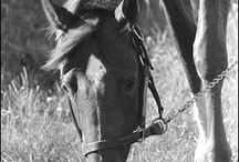 Secretariat Ruffian and Other Great Horses