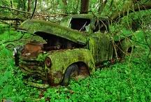 A Fungi, Moss and Lichen hunt! / Photography / Nature / Mushrooms / Svamp / Pilze / Hongo / Setas / 버섯 /  / by Wilna Van Schalkwyk