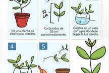 plantas reproducciones