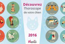 Horoscope Wamiz 2016 / Horoscope de l'année 2016 pour votre chien