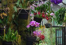orchids pergola