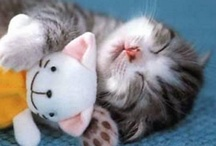 Animals with Soft Toys