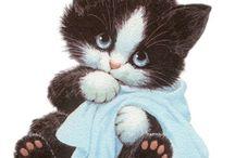 obrázky kočky