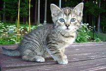 tohle miluji / miluji kočky , psy, zvířata všech druhů
