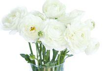 molly wedding florals