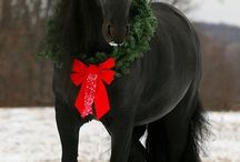 A VERY HORSEY CHRISTMAS! / Fun and frolicks with our favourite equine friends :)