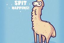 alpaca & lama
