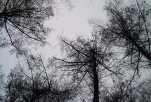 Beautiful nature / love it