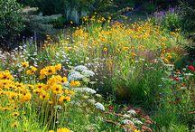 Jardin / Inspiration