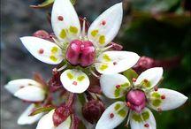 Fauna  flora/ klauzura