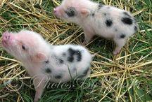 good piggies / by Mitzi James