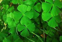 luck /