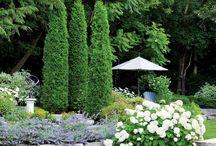 Сад / Растения цветы дизайн сада.