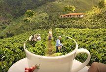 TURISMO EN EL EJE CAFETERO / Alquiler de Fincas en Quindio, Hoteles en Quindio, Fincas Turisticas, Fincahoteles, Cabañas, Camping, Planes Turisticos al Eje Cafetero, Fincas en Alquiler, Hoteles Campestres